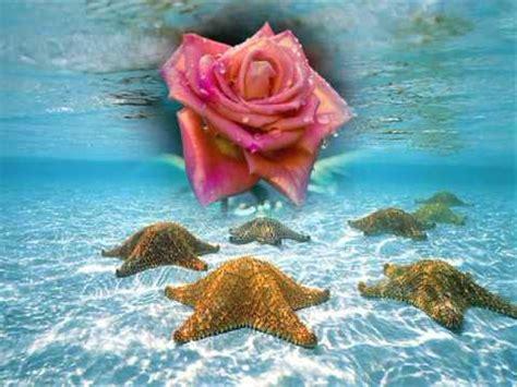 imagenes rosas en el mar rosas en el mar youtube