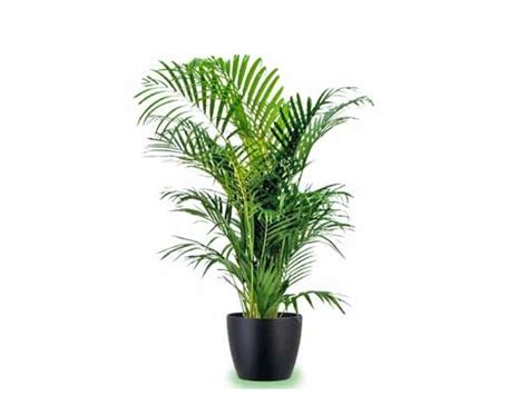 piante d appartamento resistenti piante da appartamento al buio gpsreviewspot