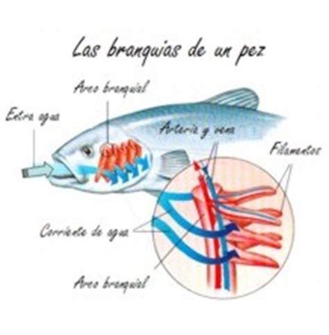 sistema de mam 237 feros depredadores aislado sobre blanco sistema respiratorio monografias monograf 237 a aparato