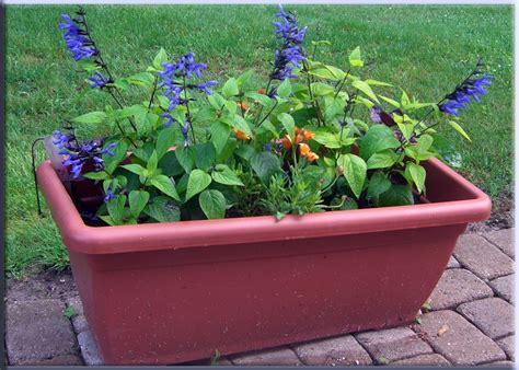 Make Your Own Self Watering Planter your own self watering planter diy
