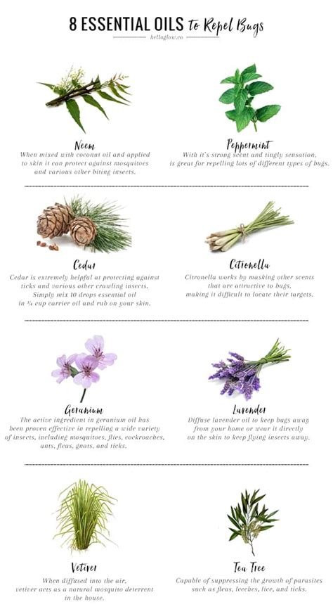 scents to keep mosquitoes away 8 essential oils that repel bugs naturally hello glow