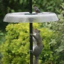 25 best ideas about squirrel proof bird feeders on