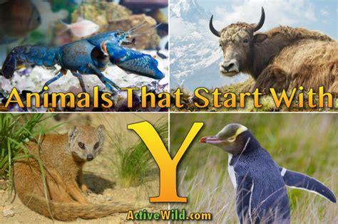 animals that start with u list of amazing animals animals that start with y list of amazing animals