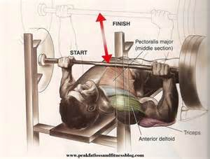 bench press worked flat barbell bench press peak loss and fitness