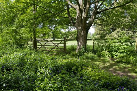 backyard forest free images landscape forest grass fence lawn