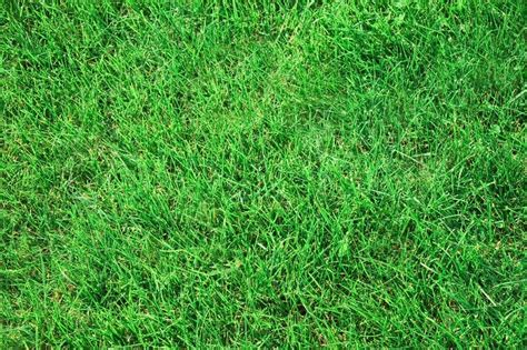 green gras auf dem rasen gras textur stockfoto colourbox