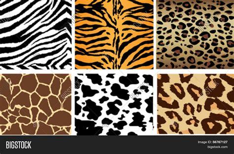 imagenes uñas animal print vector y foto fondos animales print enlosables bigstock