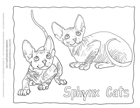 sphynx cat coloring page web page background color codes coloring home