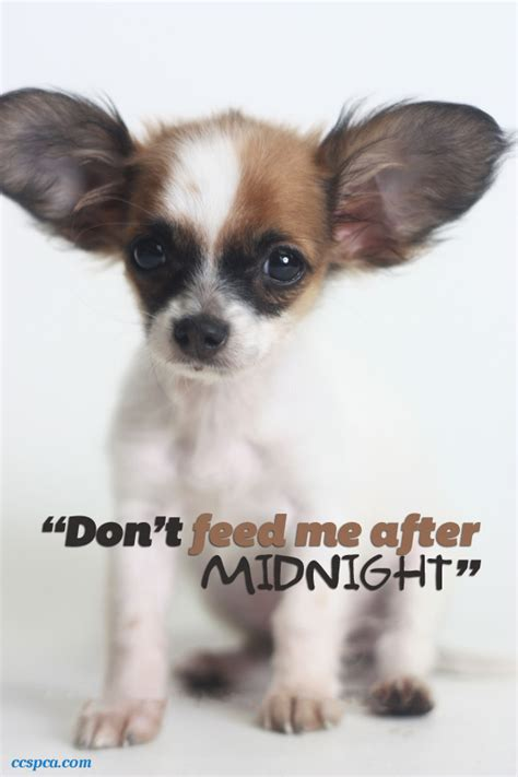 puppy captions adorable puppy caption quot don t feed me quot central california spca fresno ca