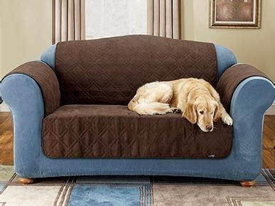 how to keep dog hair off couch furniture friend keeps pet hair off the couch cats dogs
