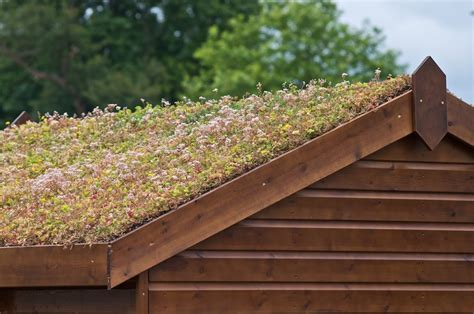 Photographer S Garden Green Roofs A Guide