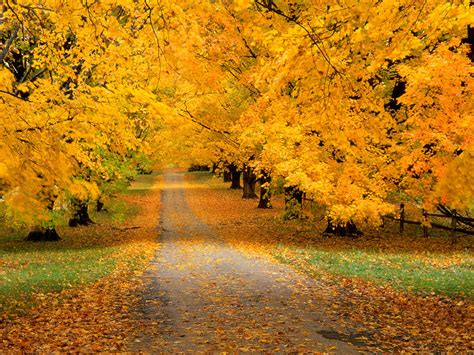 autumn color yellow autumn colors photo 27178994 fanpop