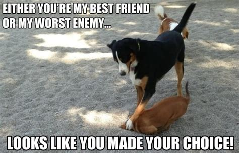 Best Memes For Facebook - dogs funny best friends meme picture for facebook