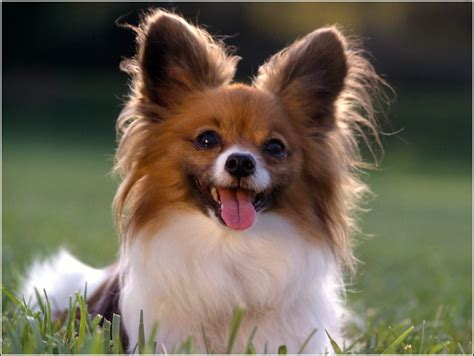 smart dogs smart dogs breeds pet photos gallery ay3klymbow