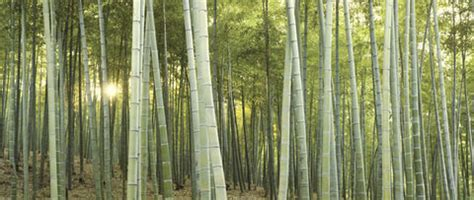 Bamboo in Construction: Is the Grass Always Greener