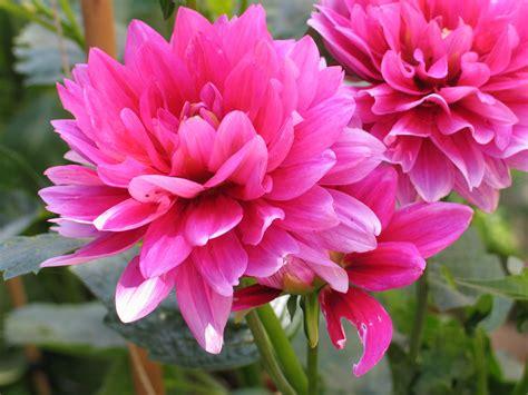 Give Your A Blume This V Day by Die Sch 246 Nste Blume Der Welt Folge 1