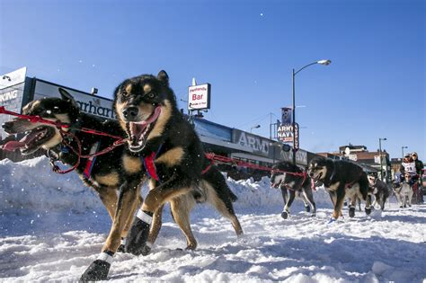 race in alaska dallas seavey unseats his as chion in the 2014 alaskan iditarod