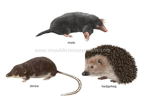 Garden Rodents Types - animal kingdom insectivorous mammals examples of insectivorous mammals image visual