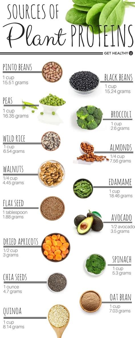 protein rich vegetables 58 best protein chart images on healthy