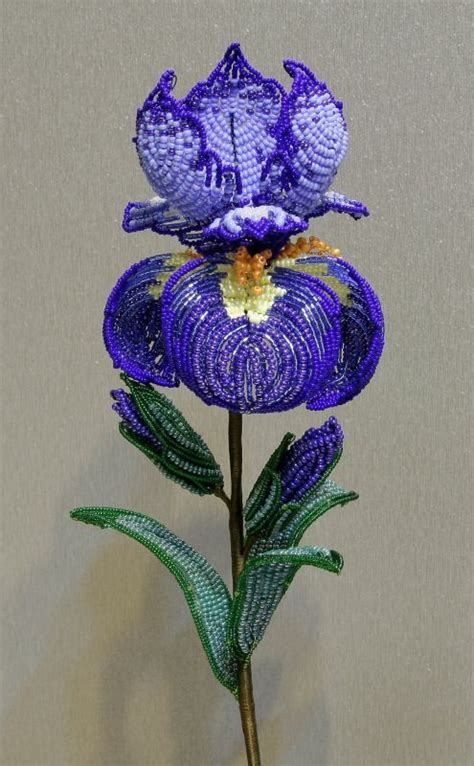 the beaded iris iris flowers irises and seed on