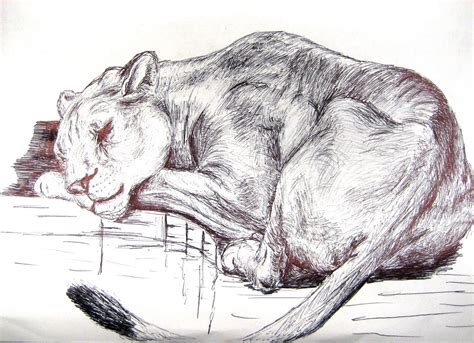 Drawings Of Animals by Chuck Does Ink Drawings Animals And Plants