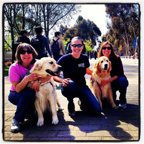 therapy california animal assisted therapy how animals help humans heal the wellness report