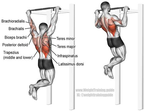 pull up exercise and weight