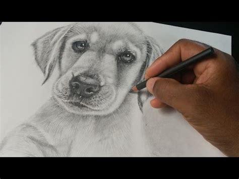 como un perro como dibujar un perro labrador retriever cachorro youtube