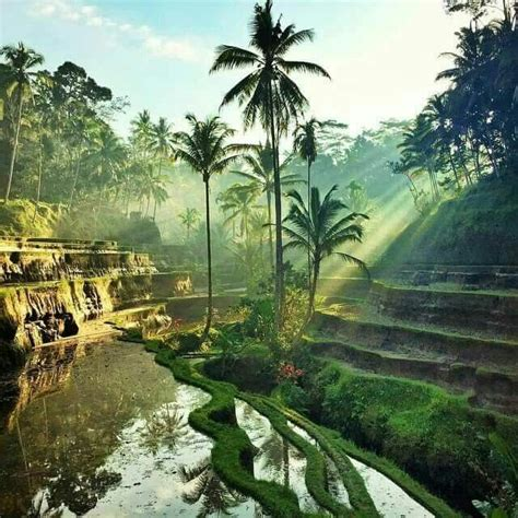 Sho Natur Di Indo 721 best bali rural vistas images on bali indonesia indonesia and vacation