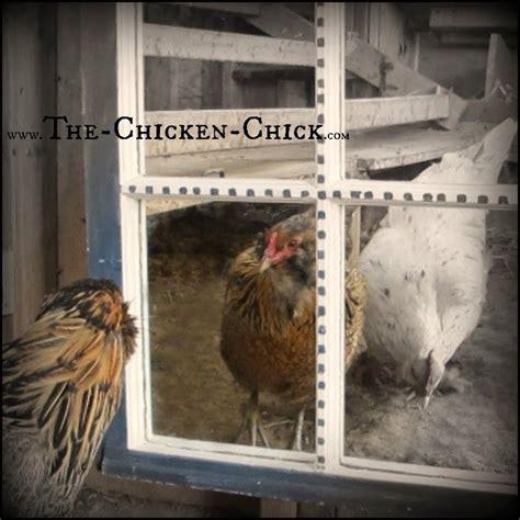Backyard Chickens Ontario Winter 1000 Ideas About Chicken Coop Blueprints On