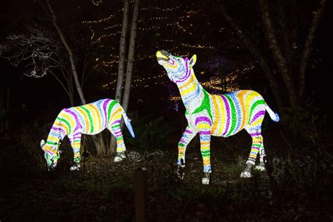 lincoln park zoo lights travel pr news lincoln park zoo s annual zoolights