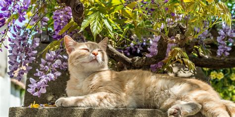 Cat Garden by Gardening Tips For Cat Owners World S Best Cat