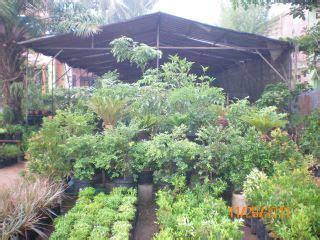 Jual Bibit Mangga Gedong Gincu Jakarta simple fast home