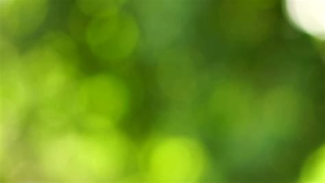 blurred wallpaper camera green out of focus natural background camera panning from