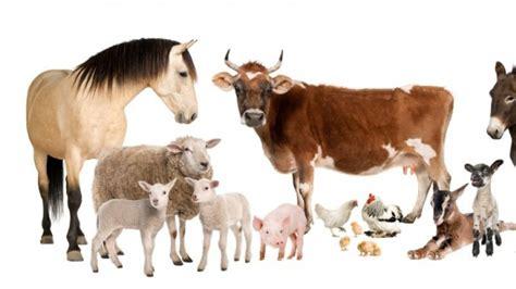 imagenes animales de granja animales de granja 1366x768 fondos de pantalla y