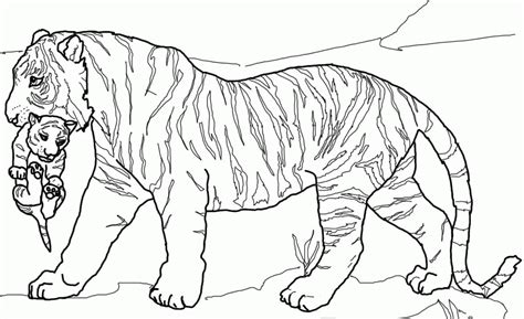 Tiger Cubs Coloring Pages coloring pages tiger cubs az coloring pages