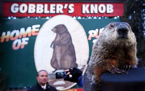 groundhog day how many days did it last punxsutawney phil sees his shadow predicts longer winter