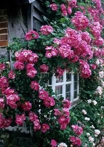 plante grimpante fleur exterieur 06 limoges d 233 coration
