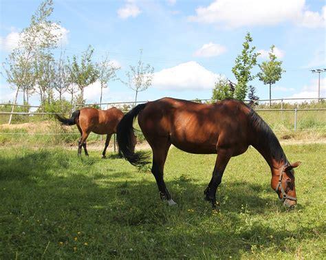 pferd decken pferdedecken abschwitzdecken ink