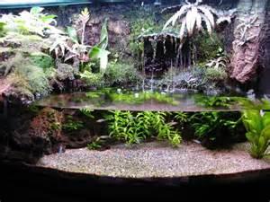 dendrobatidae and paracheirodon innesi paludarium habitats pinterest aquarium terrarium