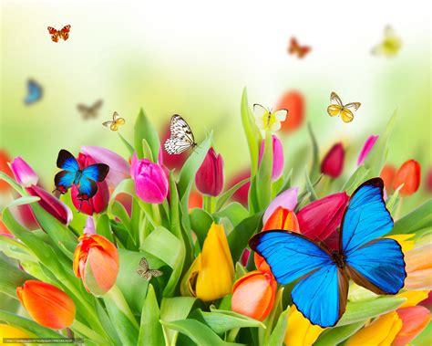 imagenes de mariposas bonitas y fondos de pantalla de mariposas descargar gratis tulipanes mariposas deja