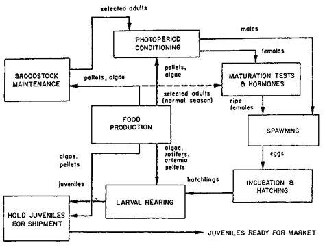 penicillin g process flow diagram blueraritan info