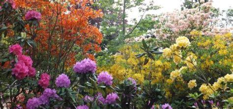 rhododendron winterfest machen garten ziergr 228 ser winterfest machen so gelingt es