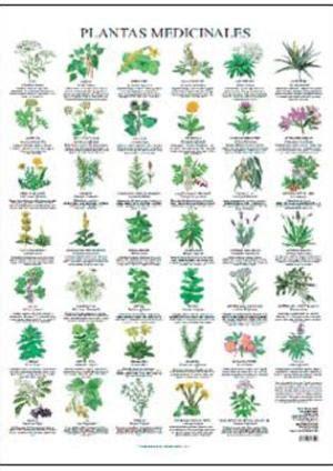 poster plantas medicinales terapias verdes