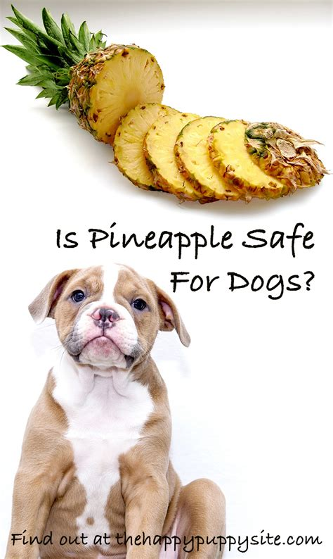 is pineapple bad for dogs can dogs eat pineapple the happy puppy site food safety guide