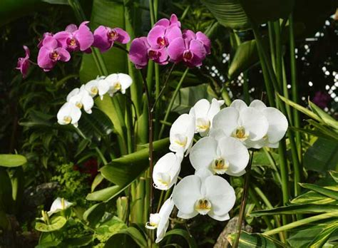 orchids floral beauty indoors