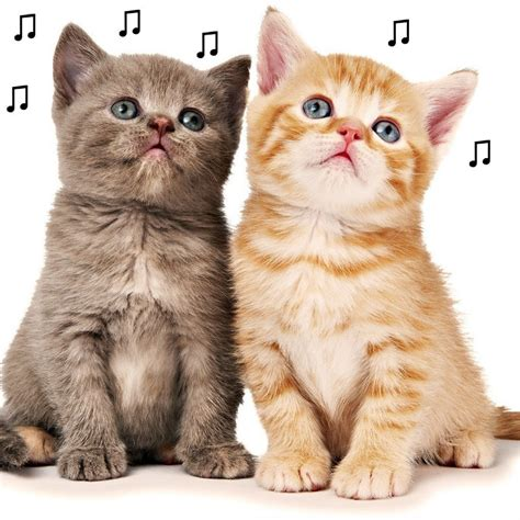 cat song the purrfect song for your puss proven by science gigwise