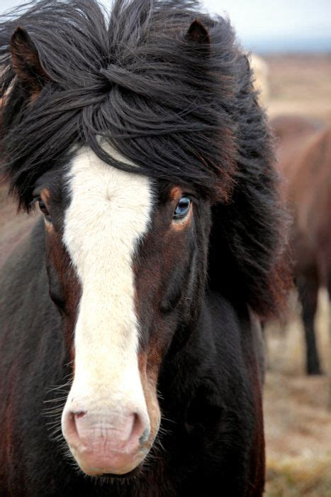 horse shoo for african american hair 209 best black and white paint pony images on pinterest