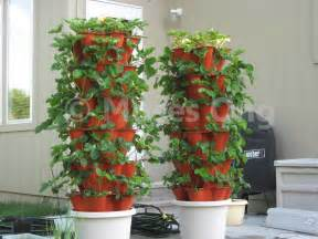 Hi Top Bar Tables How To Maintain Strawberry Plant