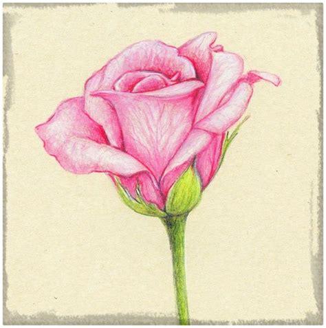 imagenes para dibujar a lapiz de rosas imagenes para dibujar de rosas a l 225 piz archivos dibujos